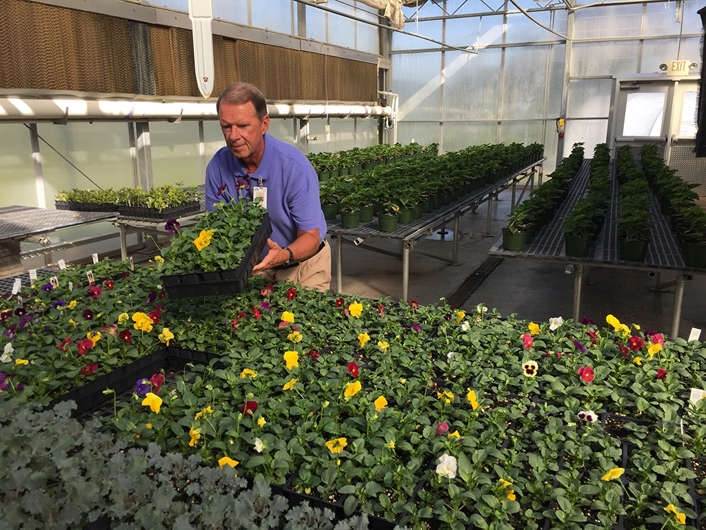 David Warren, director of Horticulture at GNTC, inspects the pansies that are on sale through Friday, Oct. 12. Behind Warren are the poinsettias that will be ready for sale closer to the Christmas holiday.
