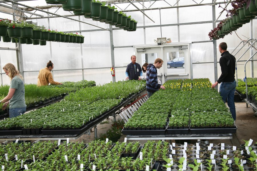 GNTC's Spring Plant Sale Extended to Four Days, April 18-21 ... on green lavender, green beets, green bonsai, green bushes, green perennial, green garden design, green flowers, green tulips, green nature, green gardening, green shrubs, green butternut squash,