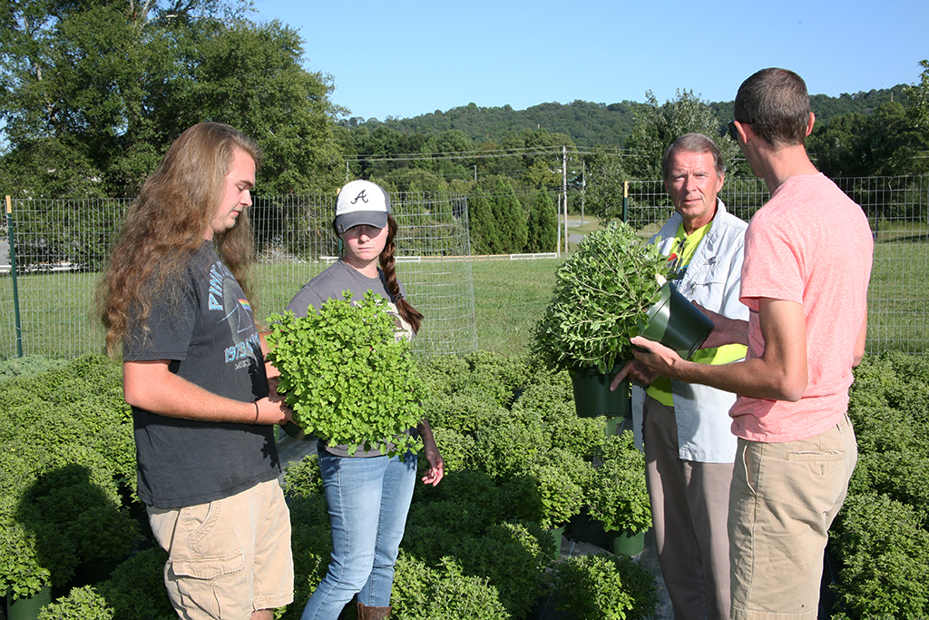 (From left to right) Evan Farrow of Lyerly; Rachel Braden of Plainville; David Warren, director of GNTC's Horticulture program; and Chase Bohannon of Calhoun inspect the mums that are about to bloom for GNTC's Fall Mum Sale.